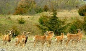 Sorkheh-Hesar-National-Park-1